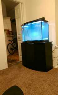 Excellent 36 gallon tank for growing and breading all live-bearer fish such guppies, platies, mollies, sword-tails. Even a pair of firemouth cichlids, jewel cichlid, corydoras.