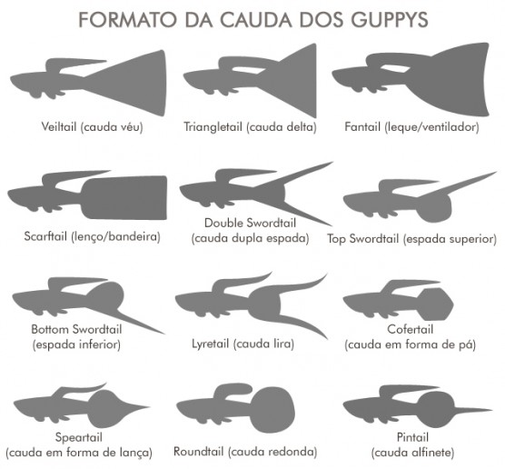 guppies-tail-shapes