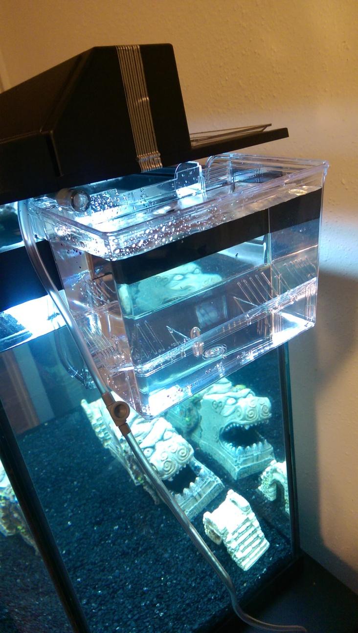 A nursery for livebearer fish.